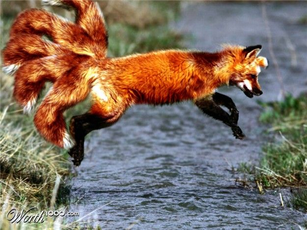 Isn't there a Japanese folktale about a 9-tailed fox?