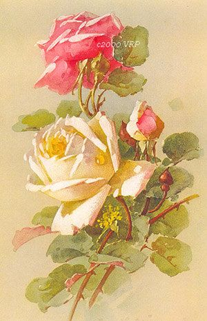 Print FREE SHIP French Roses by Catherine by VictorianRosePrints