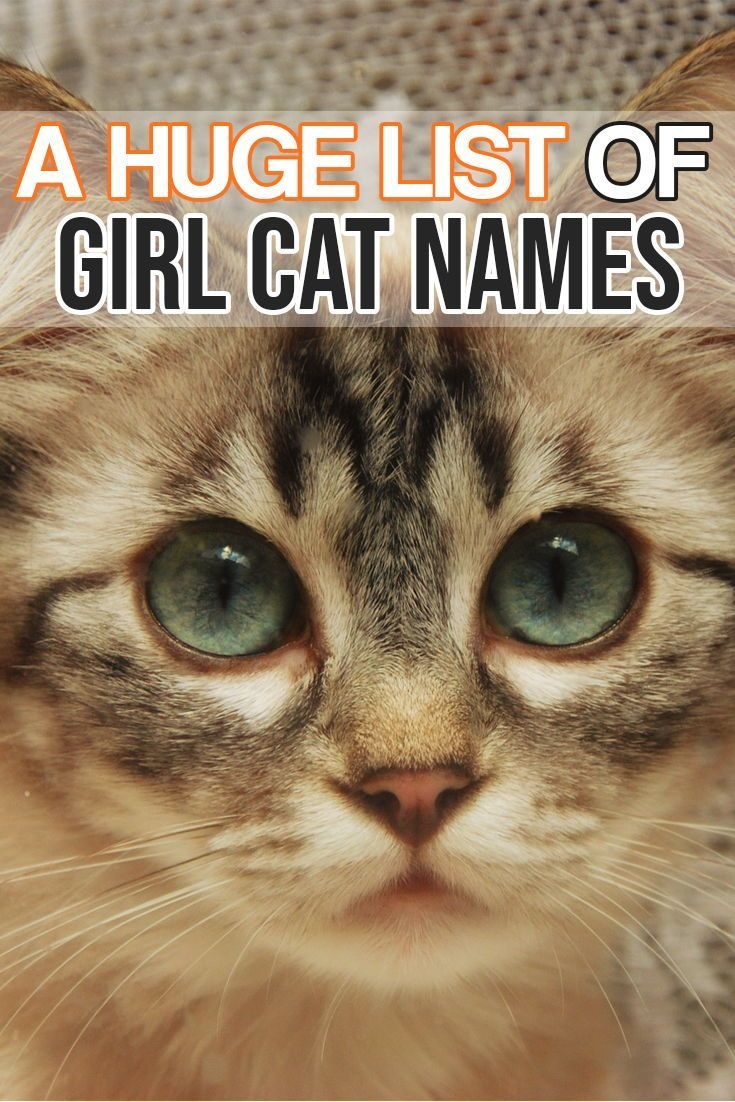 Here Is A Huge List Of Girl Cat Names For Your Amazing Girl Kitty Cat Cute Cat Names Girl Cat Names Cat Names Girl Unique