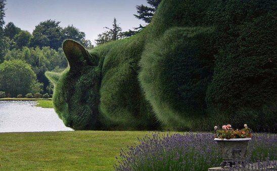 Кошка - садовая скульптура. Топиарий