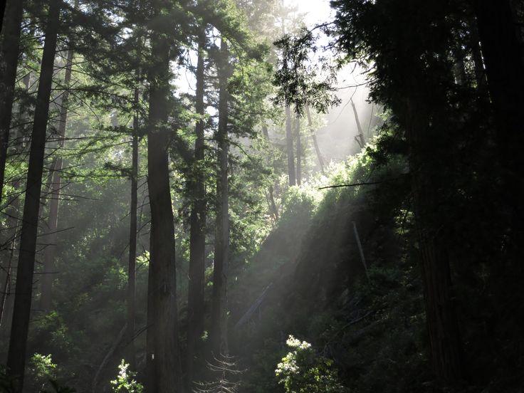 Ewoldsen Trail, Big Sur, California