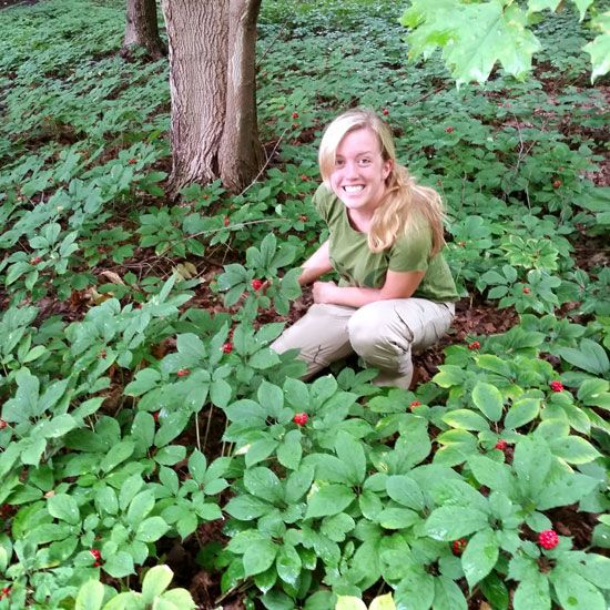 Over-harvesting American Ginseng has threatened this fascinating crop, but committed conservation can make a difference. From MOTHER EARTH NEWS magazine.
