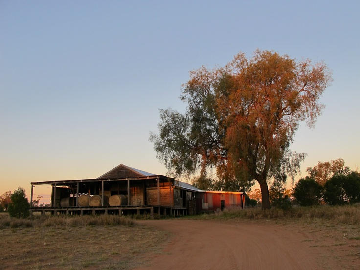 Outback Shearing Shed