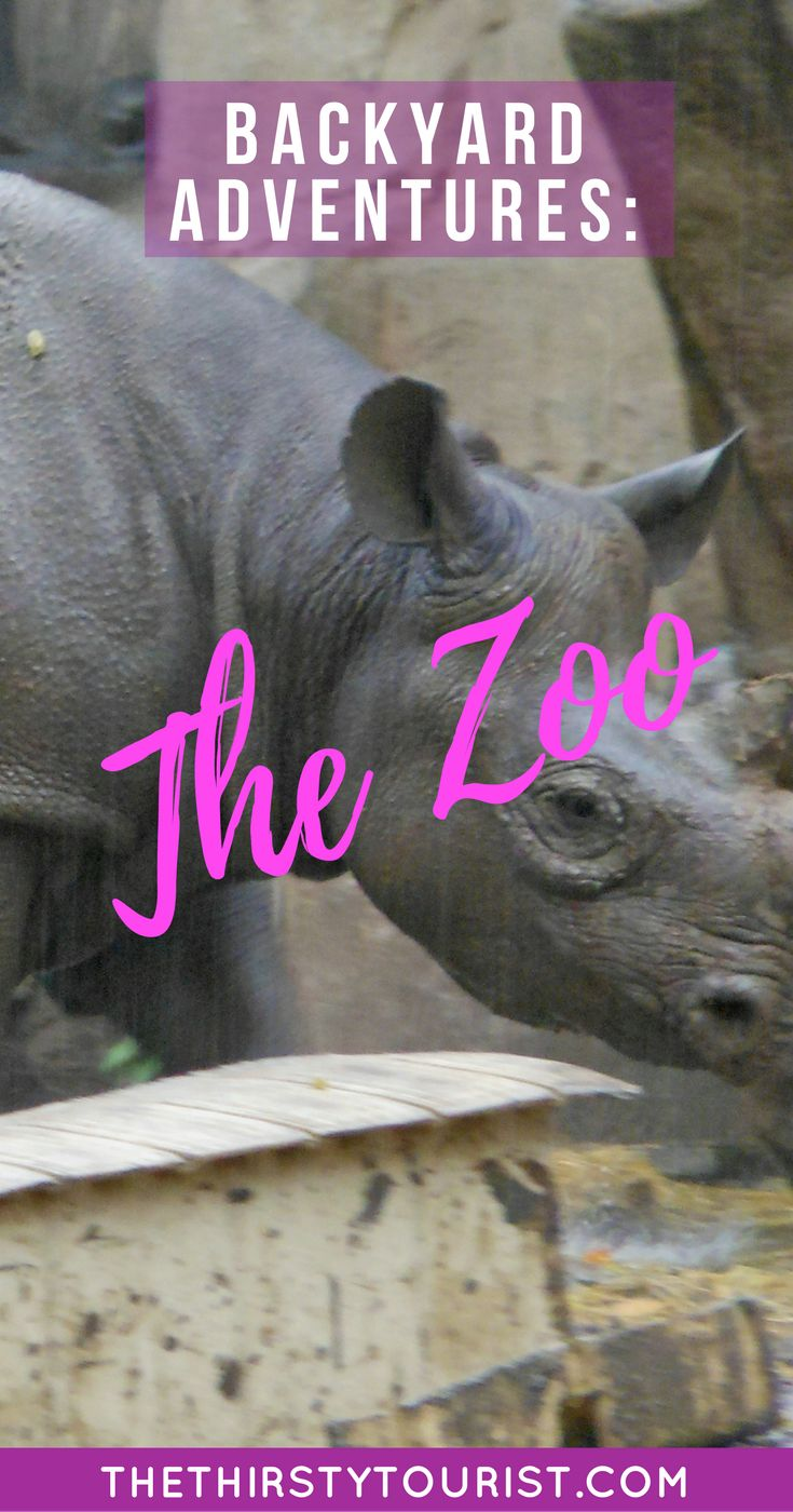 Budget Backyard Adventures: The Zoo... Be sure to follow The Thirsty Tourist for our best budget Backyard Adventures!