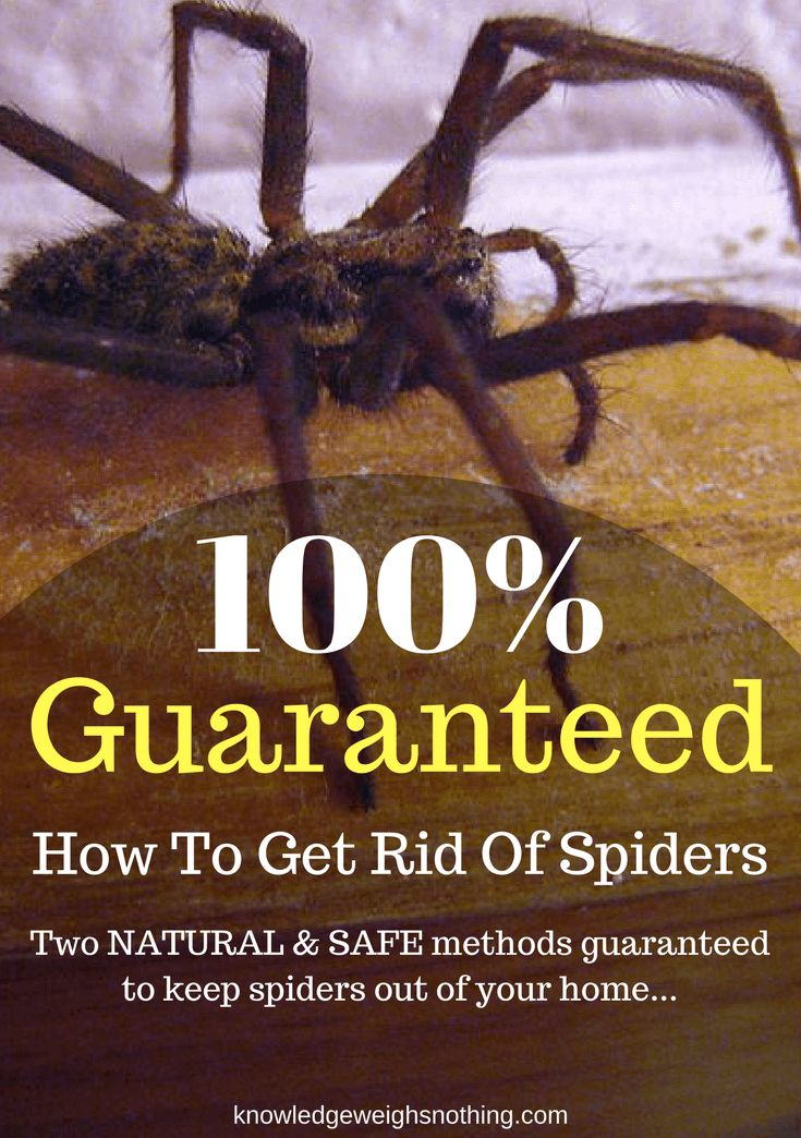How to get rid of spiders. Simply put - these methods work! Give them a try!