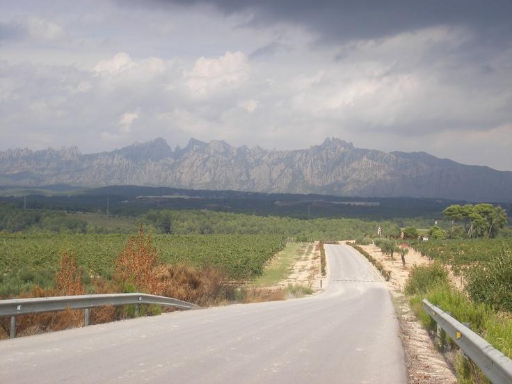 Entre viñedos y Montserrat