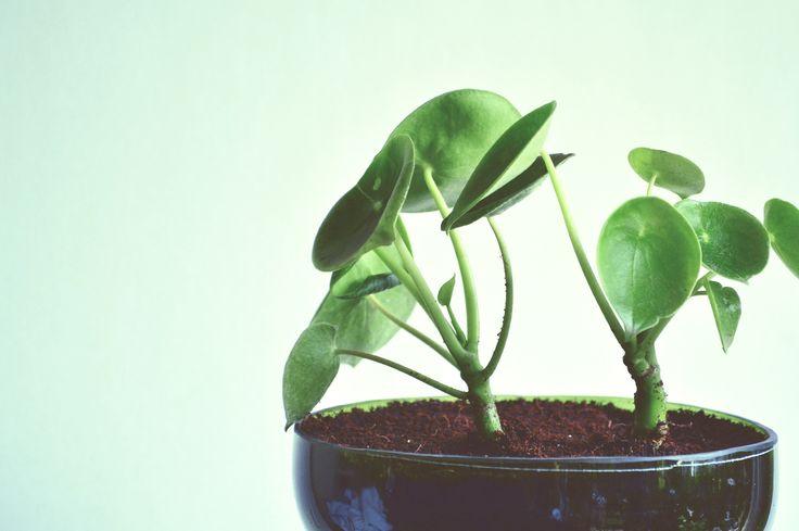 Plantas, Plantas en botellas, Diseño ecológico, Diseño sustentable, Diseño con botellas, eco diseño, plantas ornamentales, diseño de interior, plantas ornamentales, Hierba de cuchara