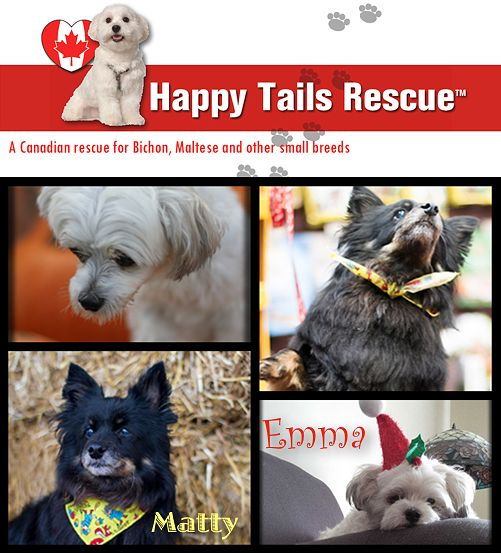 The Social Petwork - Stop the Sale of Pets in Pet Stores | Rescue in Focus: Happy Tails Rescue