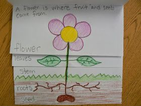 We drew a flower onto a flip book, labeled each part and then wrote a sentence to explain what that part does on the in...