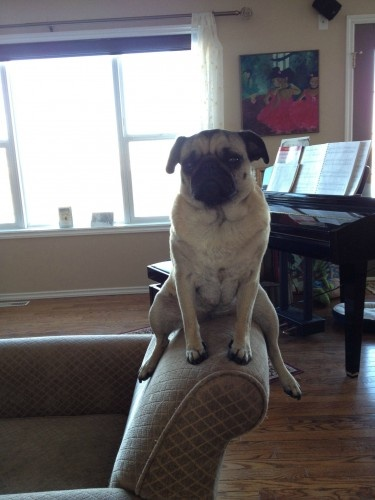 huhhhhh???Laugh, Dogs, Funny Pictures, Pets, Funny Stuff, Funny Pugs Puppies, Inspiration Quotes, True Stories, Animal