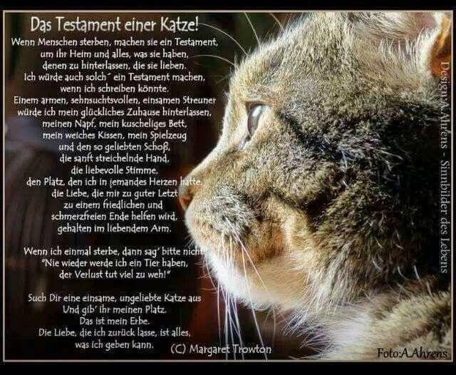 Pin Von Nikola Hesse Auf Traurige Spruche Und Bilder Spruche Katze Katzen Geliebte Katze
