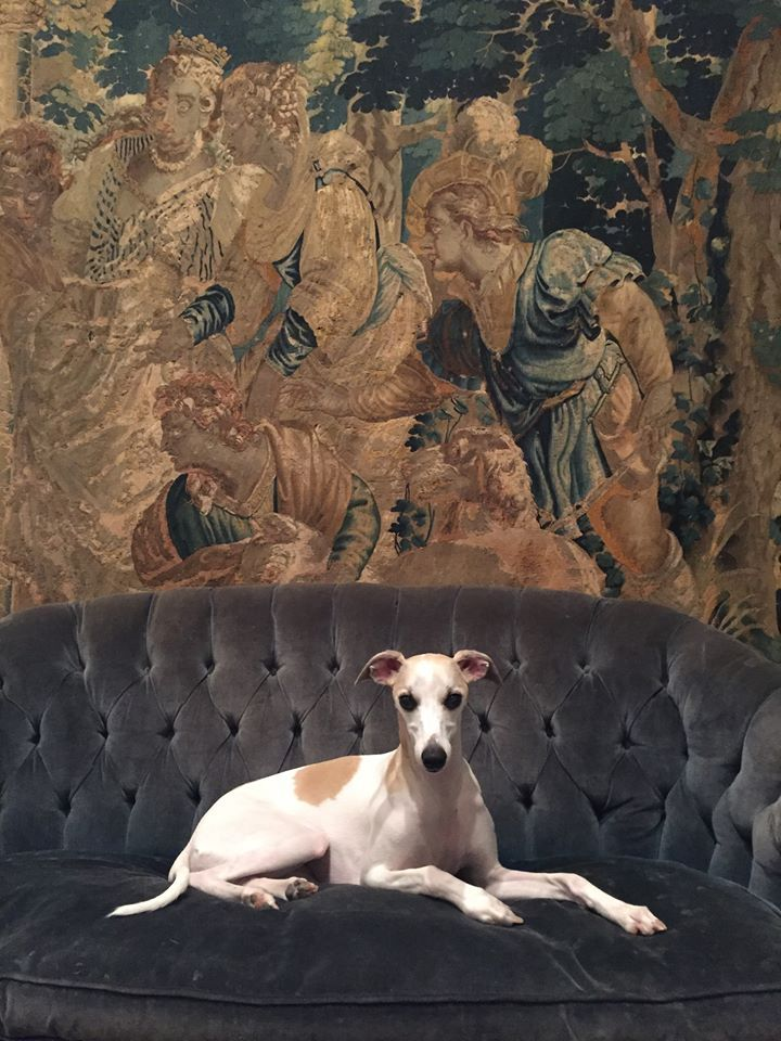 17th century Flemish tapestry and my whippet Georgiana