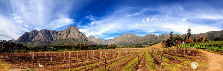 The endless beauty and towering mountains of the Banhoek Valley, Cape WInelands.