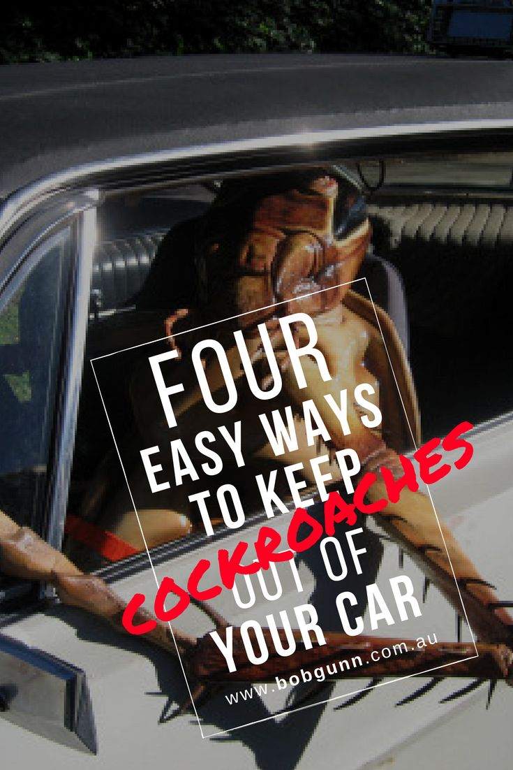 If you think cockroaches only infest homes and commercial properties, think again. They also take over vehicles. Thankfully, you can prevent them. Here's how.