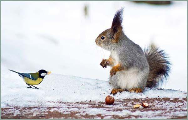 Poze haioase cu animale in seria de marti