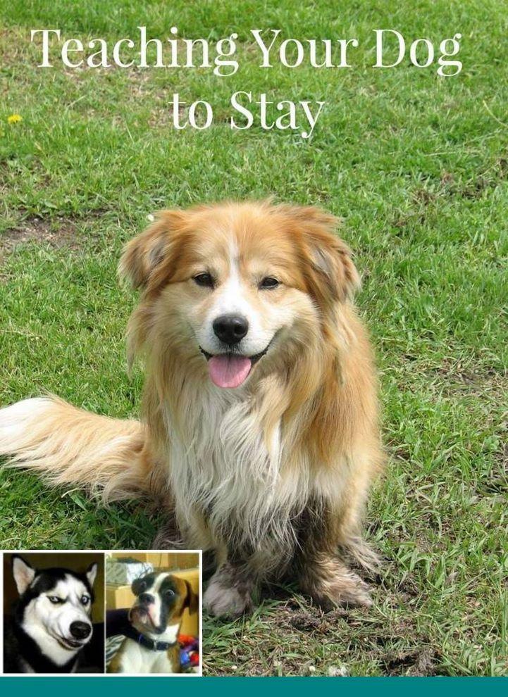 Train Dog To Sleep All Night And Diy Dog Playground Ideas Dog