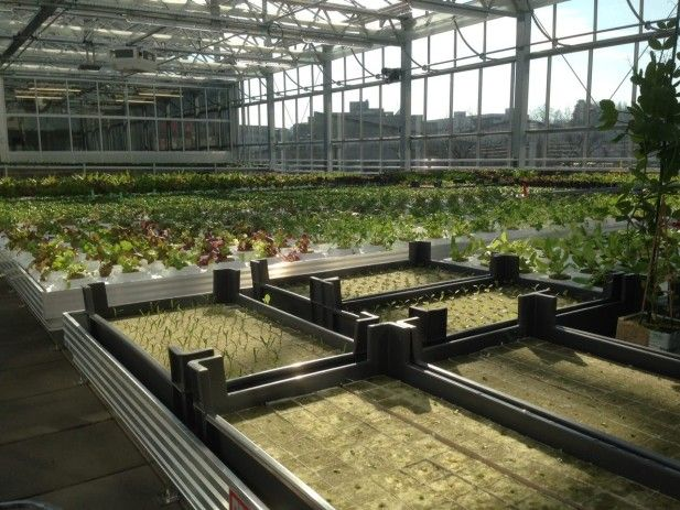 One Aquaponic Rooftop Farm to Go Please