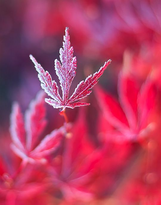 http://webdesignledger.com/inspiration/40-amazing-examples-of-macro-photography