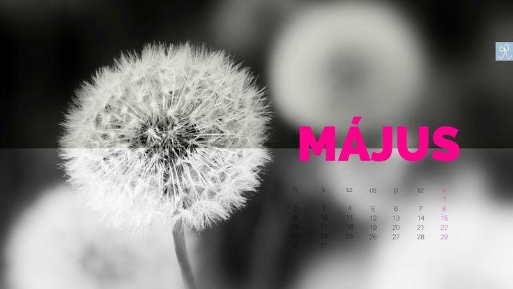 2016. május, ingyen letölthető háttér naptár - Masni, Free desktop calendar May 2016.