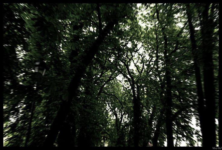 Spirit of the trees...