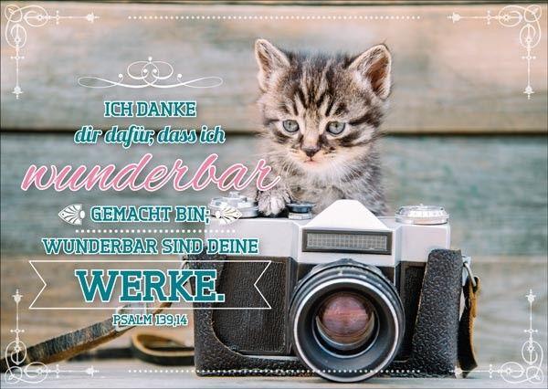 PK Katze mit Foto   Bolanz Verlag e.K.