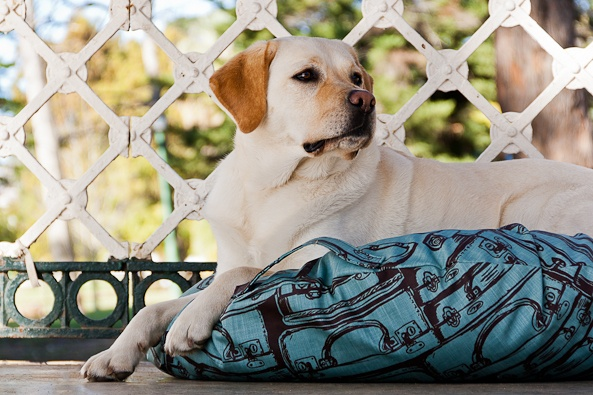 Screenprinted and eco-friendly dog bed from www.hund.co.za