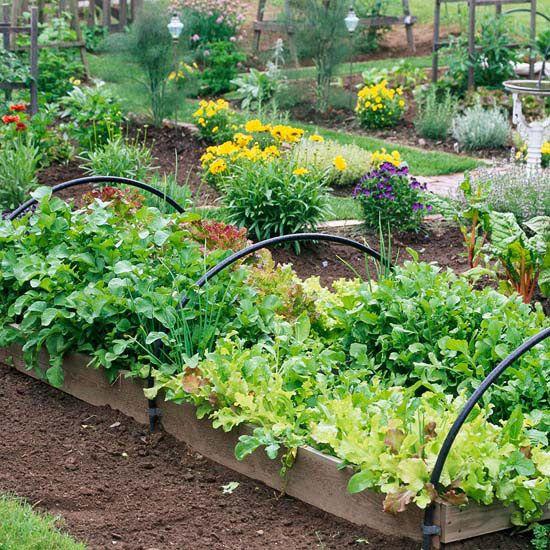 25 best ideas about fall vegetable gardening on pinterest for Fruit and vegetable garden