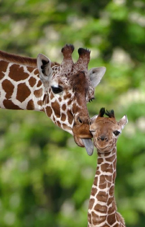 tiere und babys