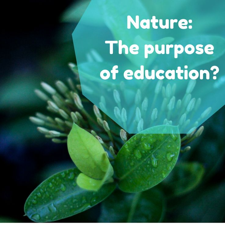 What is the purpose of education?  Is it understanding nature and how it impacts us?
