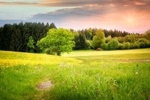 Miljø. Vi gennemgår dine rengøringsmidlers tilsætningsstoffer i et miljøperspektiv.