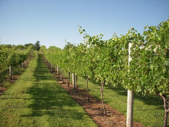 Central Iowa Winery Tours