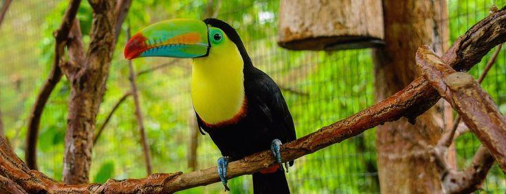La Paz Waterfall Gardens Nature Park - Wildlife Refuge Costa Rica