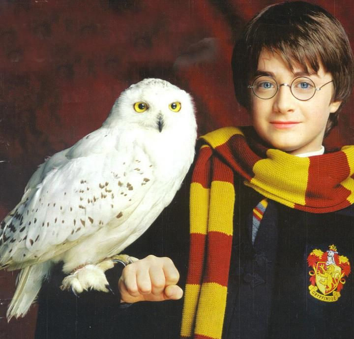 http://img4.wikia.nocookie.net/__cb20130612023937/harrypotter/images/6/63/Harry-Potter-Hedwig.jpg