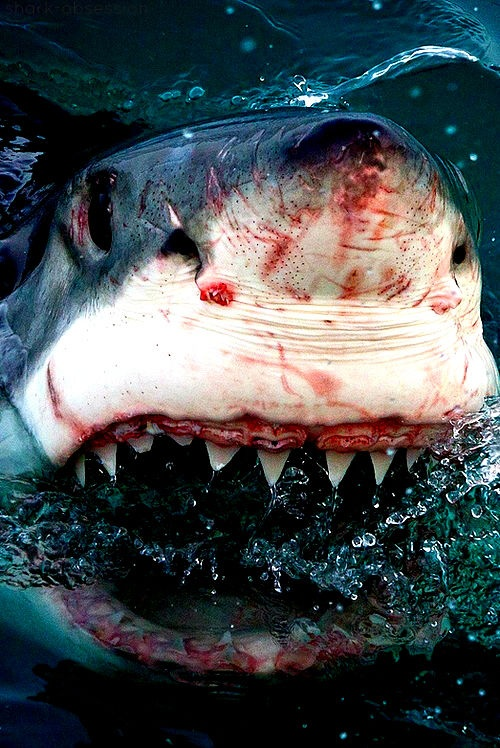 sharks. This guy is beat to hell, would hate to see the other party!