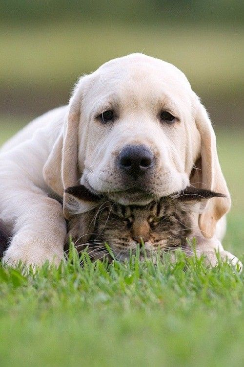 You a nice pillow !
