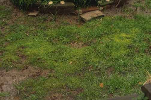 Good post on steps to help eliminate moss...kill moss, thatch it out, aerate, improve PH with lime.