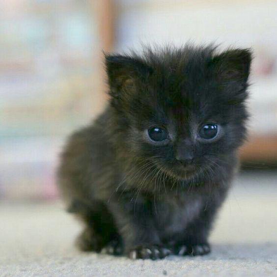Moody Selfie Cute Animals Cute Baby Animals Kittens Cutest