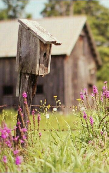 Country Spring with pink flowers