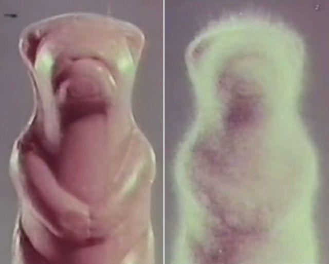 Fuzzy Wuzzy bath soap: I grow 'fur' (1960s)