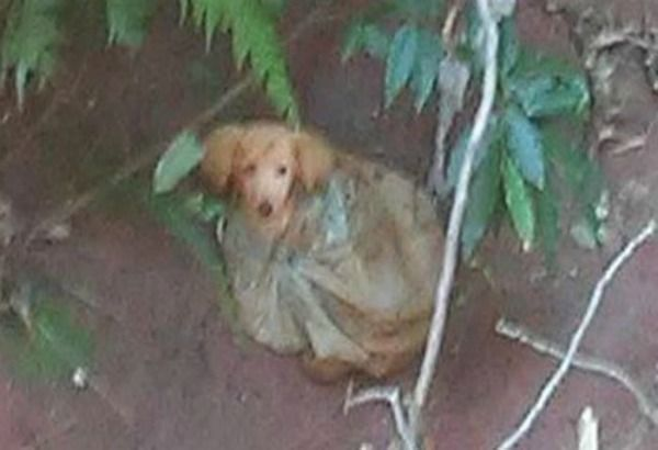 Teneri cuccioli Notizie: Un messaggio su Facebook salva la vita di un cane ...