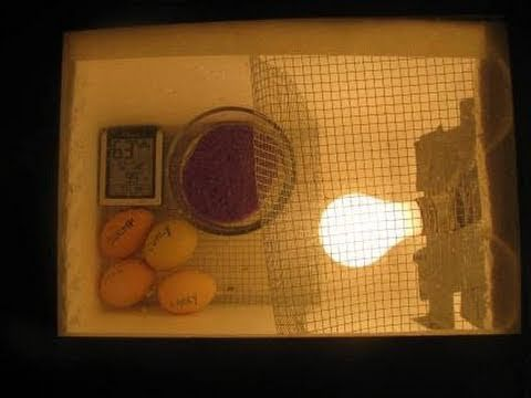 How to make a homemade incubator for chicken eggs. Like the resourcefulness of this. We just bought one for our school for over two hundred dollars. This one would probably cost less than $25.