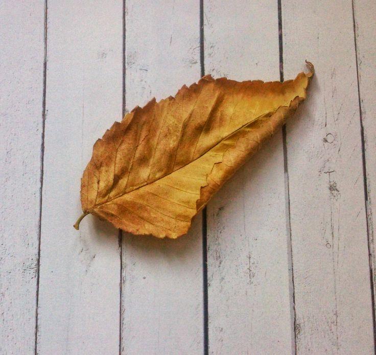 cuatro juegos sencillos de otoño, con actividad de emparejar imágenes otoñales imprimible.