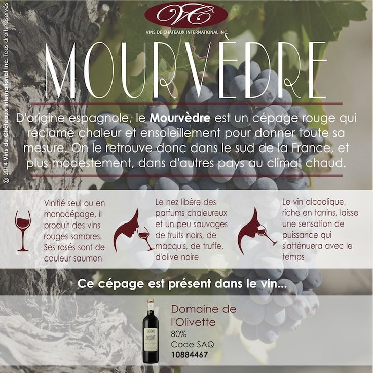 Retrouvez le cépage Mourvèdre dans le Domaine de l'Olivette, vin rouge de Bandol (Côtes de Provence), présent dans nombreuses de vos SAQ (code 10884567)  http://www.saq.com/page/fr/saqcom/vin-rouge/domaine-de-lolivette-2009/10884567
