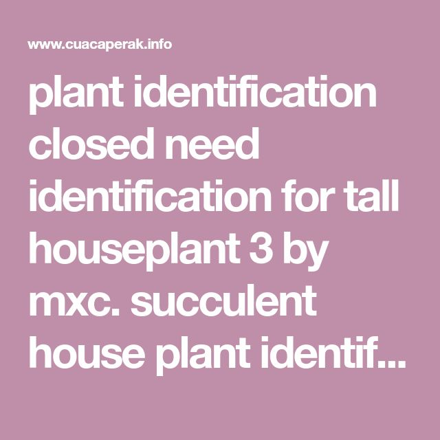 A Guide To Identifying Your Home Décor Style: Best 25+ Plant Identification Ideas On Pinterest