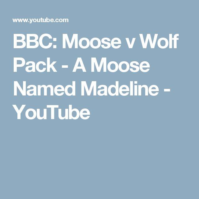 25+ Best Wolf Name Ideas On Pinterest