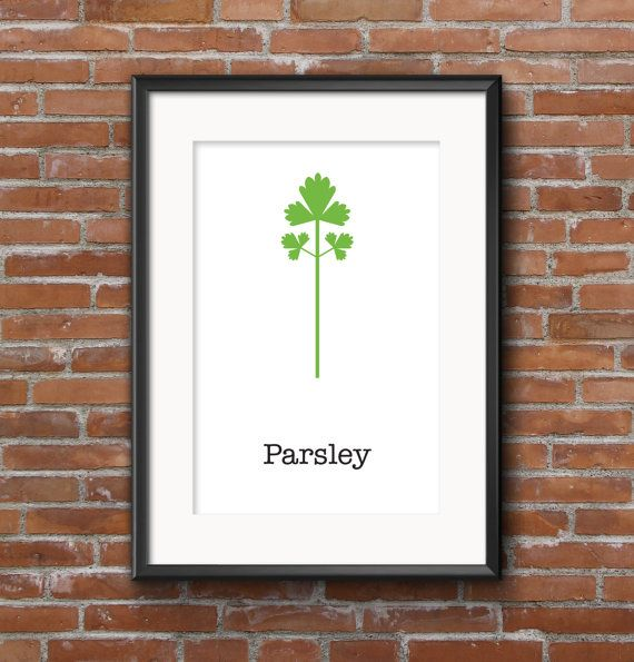 Poster kitchen Parsley / Wall poster food / Posters by SketchChe