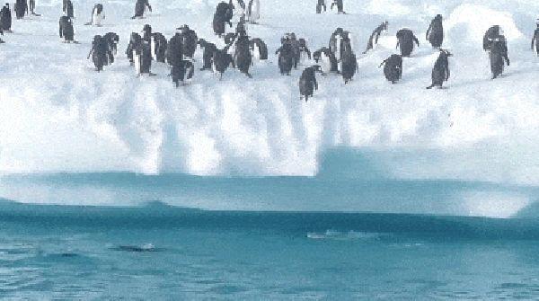 tvhvbckxsdqxlfnzhlos_penguin-jumps