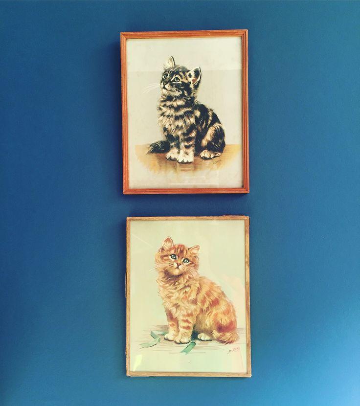 #cat #pictures #vintage