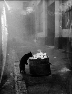 Lyon, France (black cat)  Sabine Weiss , 1950