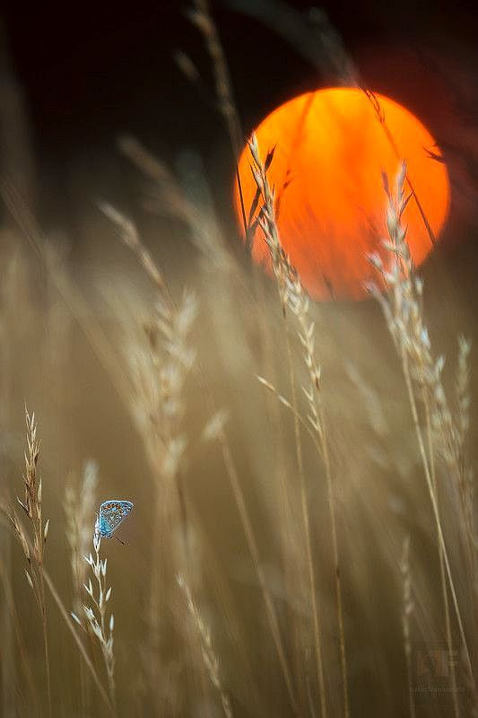 """Harvest """"Oh paint the fields bright and golden, drench the harvest with Your rain."""""""